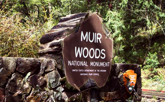 Muir Woods - Bus Tours from San Francisco