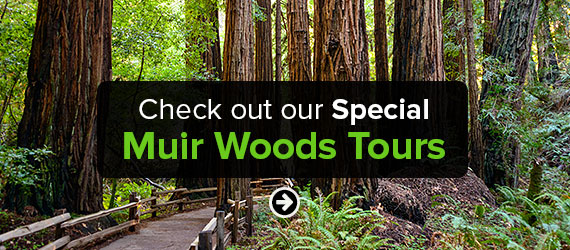 Click here to Check out our Special Muir Woods Tours!