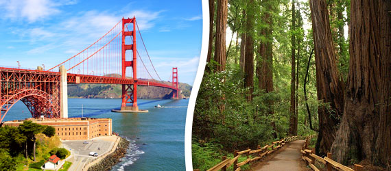 5 Hour Premium City + Muir Woods COMBO Tour